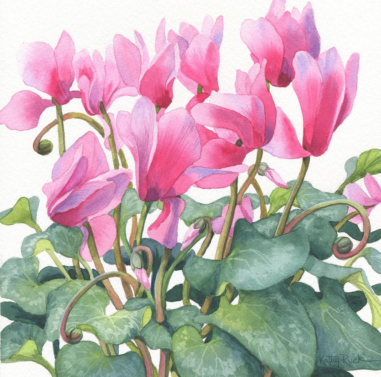 Pink Cyclamen - Kathy Ruck