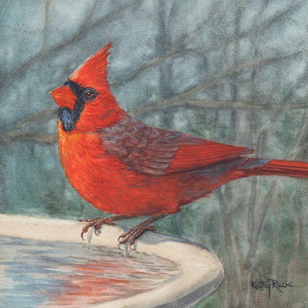 Ruck_Cardinal Boy