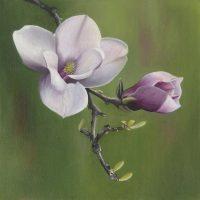 Magnolia Liliflora - Amy Stewart